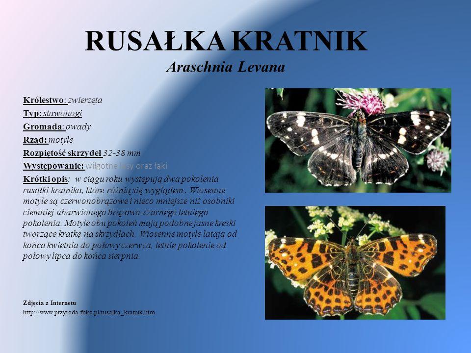 RUSAŁKA KRATNIK Araschnia Levana Królestwo: zwierzęta Typ: stawonogi Gromada: owady Rząd: motyle Rozpiętość skrzydeł 32-38 mm Występowanie: wilgotne l
