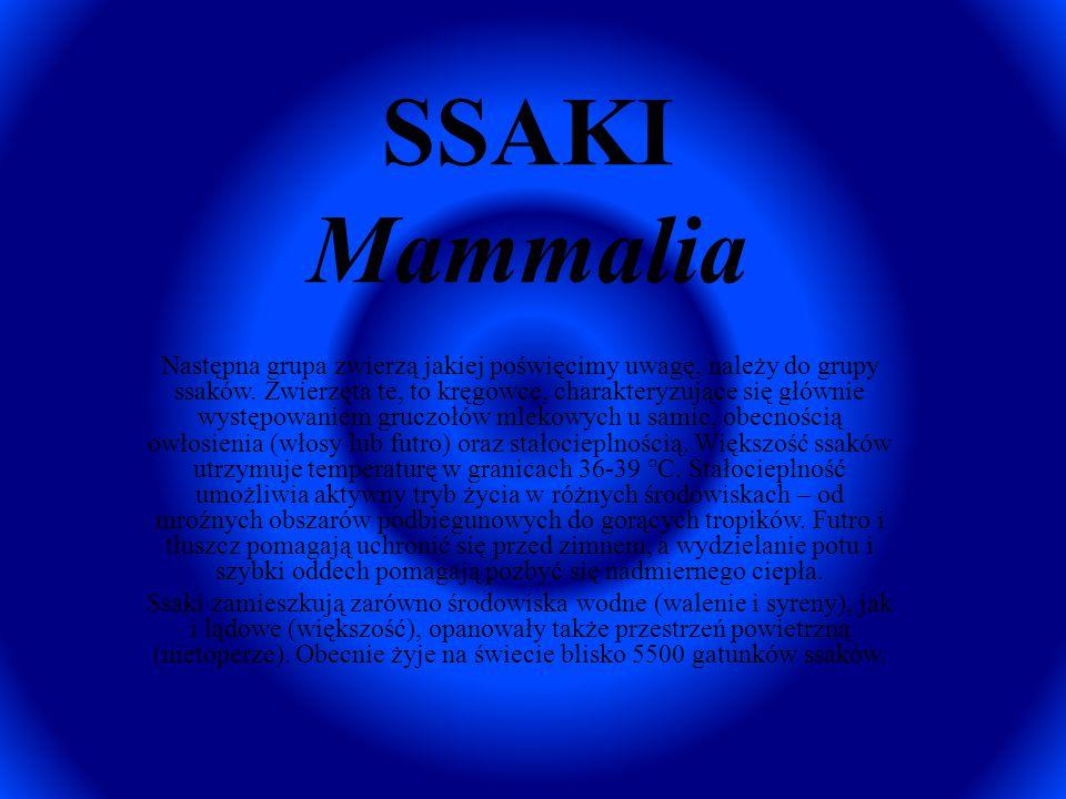 SSAKI Mammalia Następna grupa zwierzą jakiej poświęcimy uwagę, należy do grupy ssaków. Zwierzęta te, to kręgowce, charakteryzujące się głównie występo