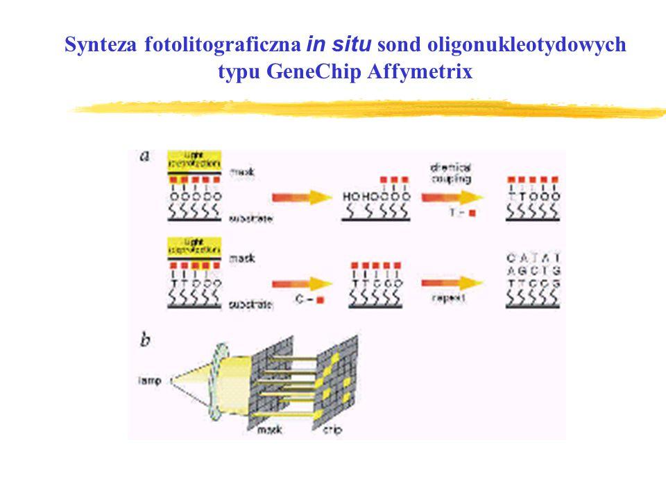 Synteza fotolitograficzna in situ sond oligonukleotydowych typu GeneChip Affymetrix