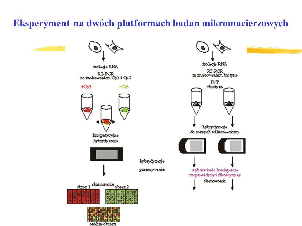 Eksperyment na dwóch platformach badan mikromacierzowych