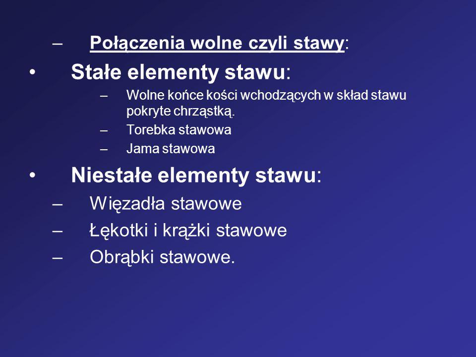 –Połączenia wolne czyli stawy: Stałe elementy stawu: –Wolne końce kości wchodzących w skład stawu pokryte chrząstką. –Torebka stawowa –Jama stawowa Ni