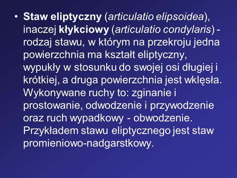 Staw eliptyczny (articulatio elipsoidea), inaczej kłykciowy (articulatio condylaris) - rodzaj stawu, w którym na przekroju jedna powierzchnia ma kszta