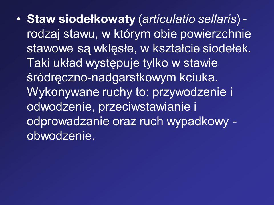Staw siodełkowaty (articulatio sellaris) - rodzaj stawu, w którym obie powierzchnie stawowe są wklęsłe, w kształcie siodełek. Taki układ występuje tyl