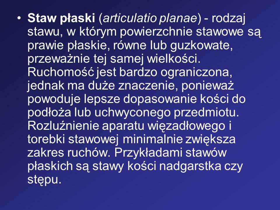 Staw płaski (articulatio planae) - rodzaj stawu, w którym powierzchnie stawowe są prawie płaskie, równe lub guzkowate, przeważnie tej samej wielkości.