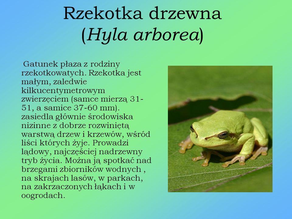 Nadobnica alpejska ( Rosalia alpina ) Owad z rzędu chrząszczy. W Polsce jest to gatunek objęty ścisłą ochroną gatunkową, znajduje się na czerwonej liś