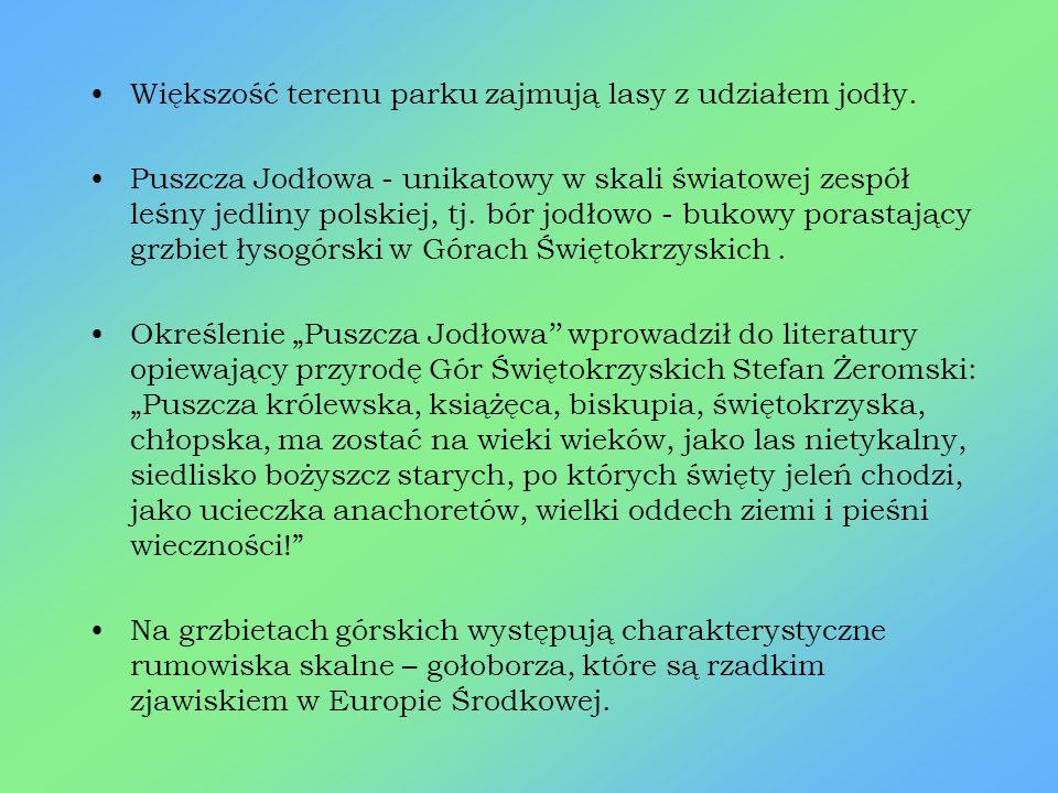Ciekawostki Najwyższym szczytem Gór Świętokrzyskich jest Łysica (612 m.n.p.m) w paśmie Łysogór. Na obszarze Parku 674 drzewa objęto ochroną jako pomni
