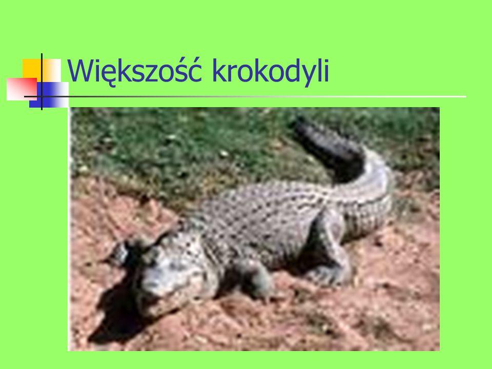Większość krokodyli