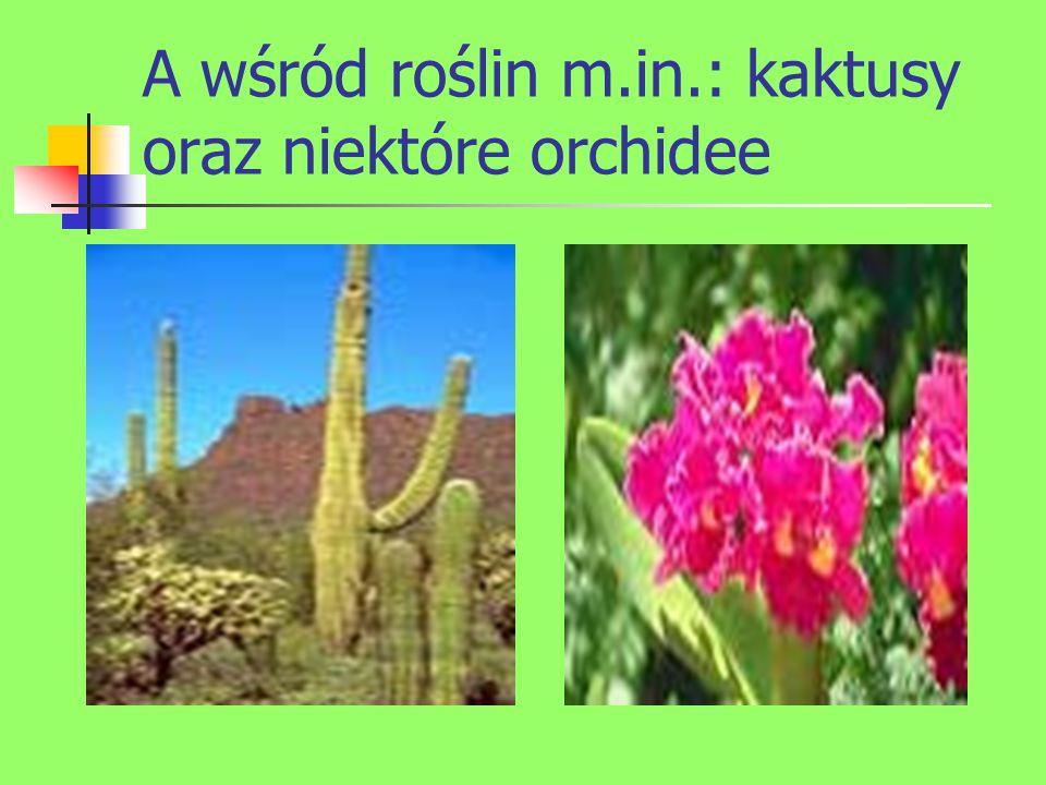A wśród roślin m.in.: kaktusy oraz niektóre orchidee