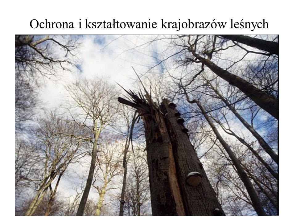 Ochrona i zagospodarowanie lasów Lasy polskie znajdują się w sytuacji stałego zagrożenia przez czynniki abiotyczne,biotyczne i antropogeniczne, co powoduje, że zagrożenie lasów w Polsce należy do najwyższych w Europie.