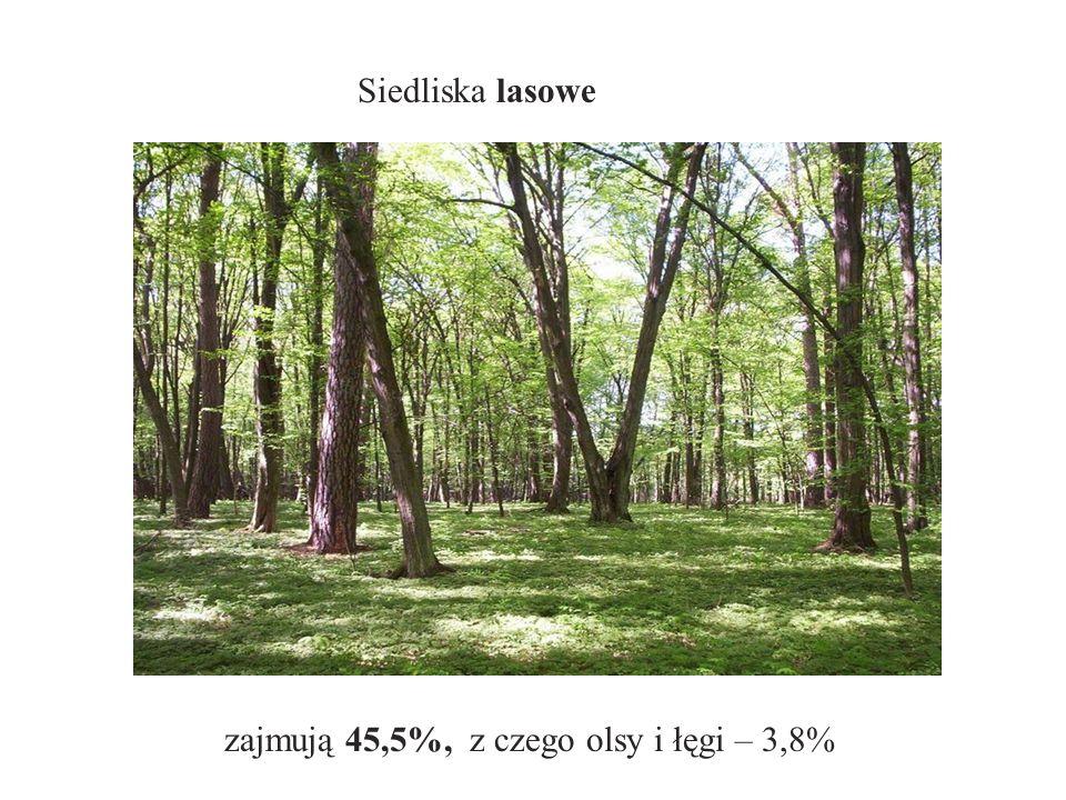 Siedliska lasowe zajmują 45,5%, z czego olsy i łęgi – 3,8%