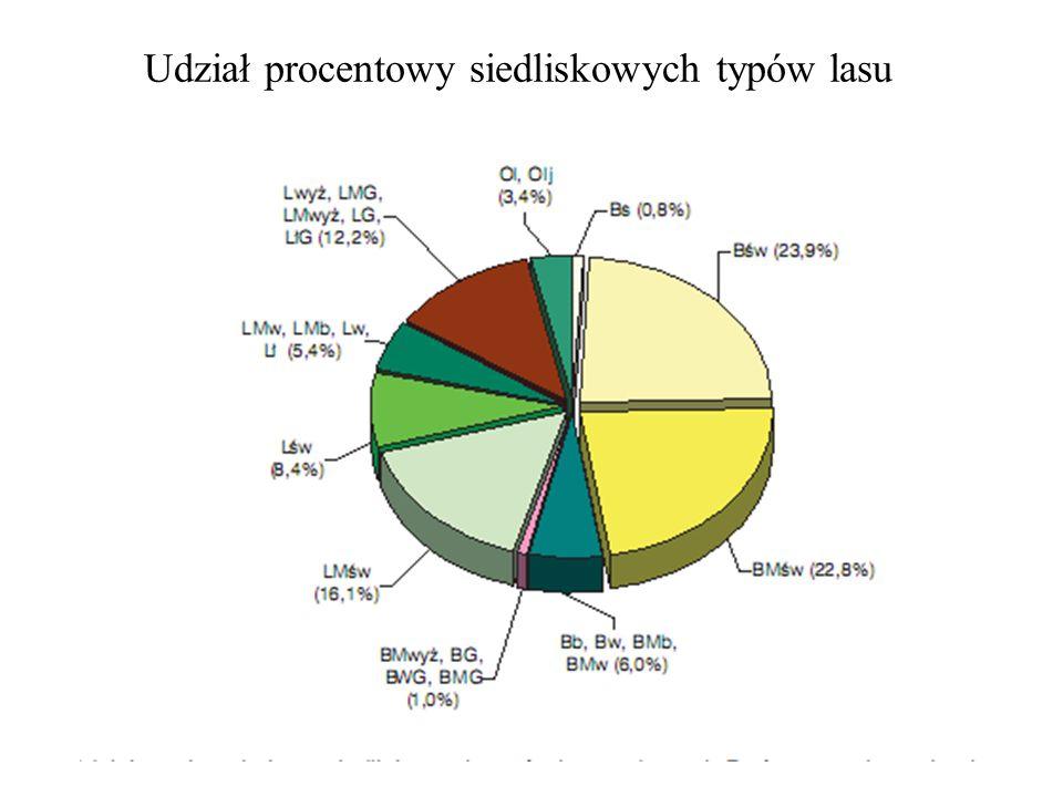 Udział procentowy siedliskowych typów lasu