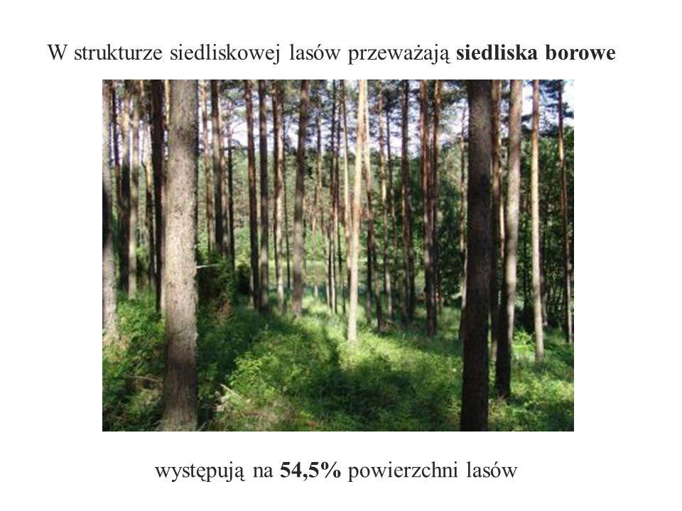 W strukturze siedliskowej lasów przeważają siedliska borowe występują na 54,5% powierzchni lasów