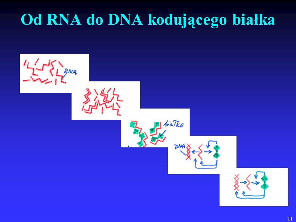 11 Od RNA do DNA kodującego białka
