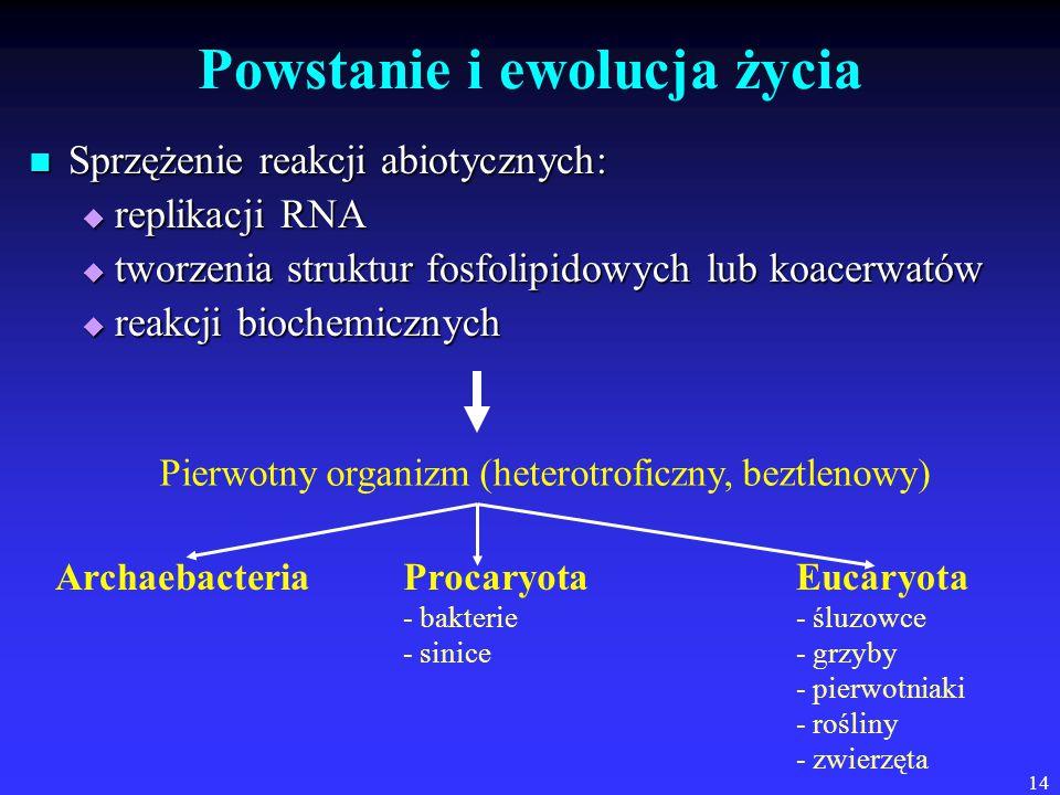 14 Powstanie i ewolucja życia Sprzężenie reakcji abiotycznych: Sprzężenie reakcji abiotycznych:  replikacji RNA  tworzenia struktur fosfolipidowych lub koacerwatów  reakcji biochemicznych Pierwotny organizm (heterotroficzny, beztlenowy) ArchaebacteriaProcaryota - bakterie - sinice Eucaryota - śluzowce - grzyby - pierwotniaki - rośliny - zwierzęta
