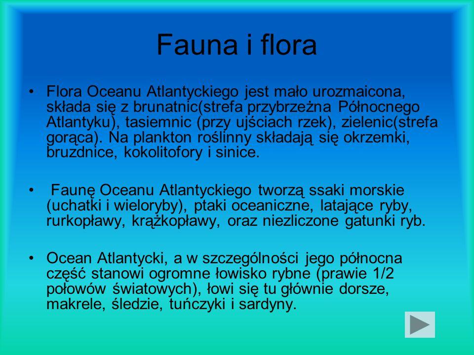 Fauna i flora Flora Oceanu Atlantyckiego jest mało urozmaicona, składa się z brunatnic(strefa przybrzeżna Północnego Atlantyku), tasiemnic (przy ujści
