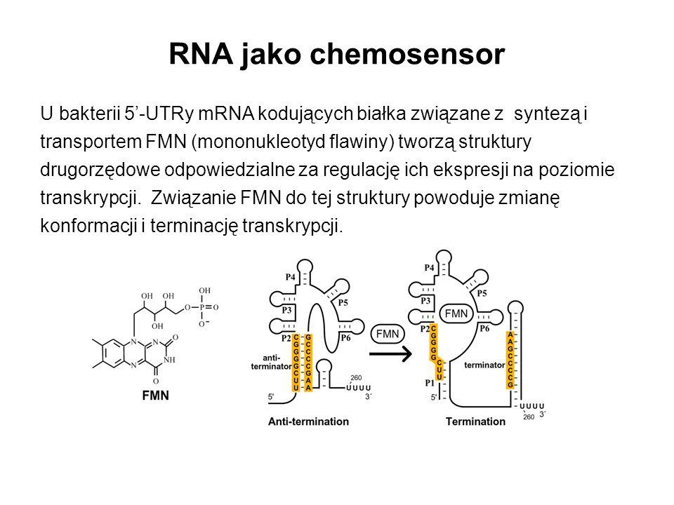 U bakterii 5'-UTRy mRNA kodujących białka związane z syntezą i transportem FMN (mononukleotyd flawiny) tworzą struktury drugorzędowe odpowiedzialne za