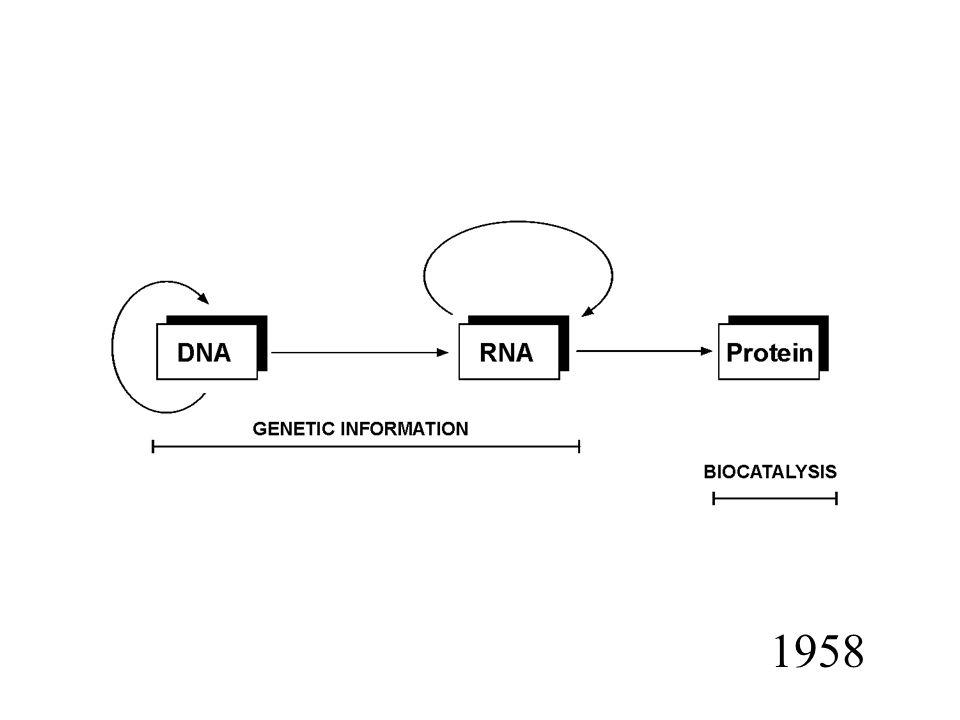 mfold (Zuker & Stadler 1981, Zuker 1989) Pętle zamknięte większą liczbą par zasad zwane są pętlami wielorozgałęzionymi (multibranch loops) Każdą strukturę drugorzędowa można opisać jako zbiór pętli należących do jednego z w/w pięciu typów oraz niesparowanych regionów przy końcach.