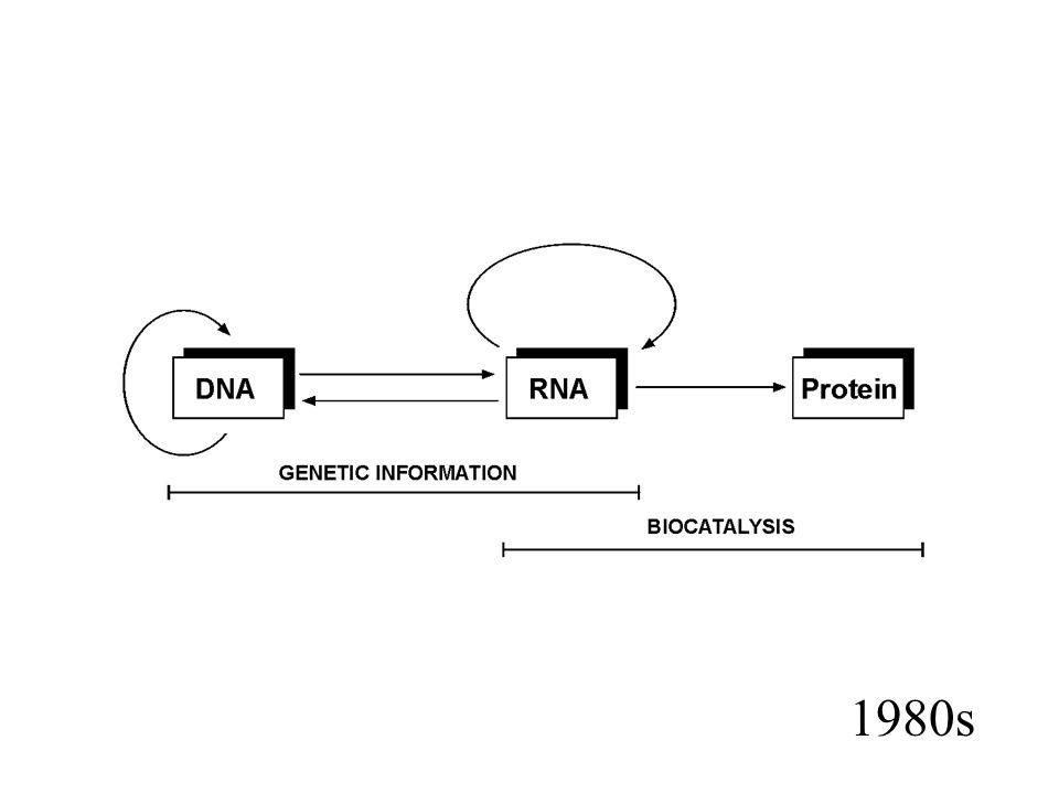 Około 98% sekwencji DNA podlegających transkrypcji w genomach ssaków nie koduje białek 3 -UTR, 5 -UTR introny ncRNA (~50% transkryptów)
