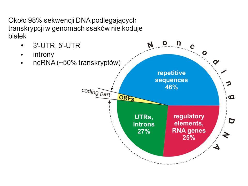 Około 98% sekwencji DNA podlegających transkrypcji w genomach ssaków nie koduje białek 3'-UTR, 5'-UTR introny ncRNA (~50% transkryptów)
