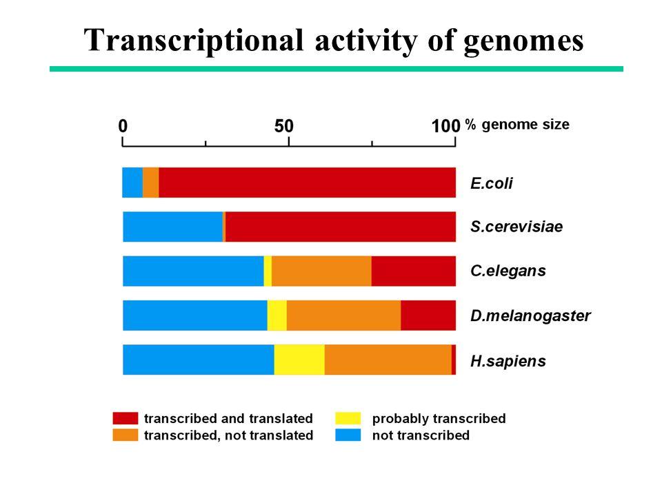 Transcriptional activity of genomes