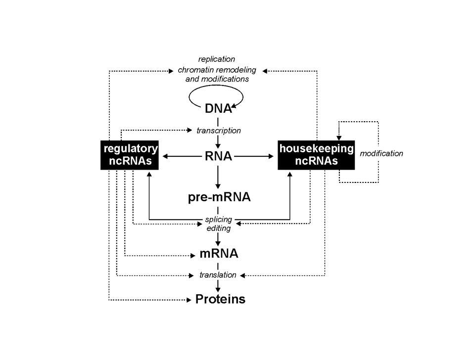 TAR i RRE są strukturami kluczowymi dla propagacji HIV Struktury 3'- i 5'-UTR są odpowiedzialne za regulację translacji niektórych mRNA IRES (internal ribosome entry site) umożliwia inicjację translacji niezależną od rozpoznania 5'-końcowej modyfikacji i udziału białkowych czynników inicjacyjnych Struktury RNA w regulacji ekspresji genów Regulacja potranskrypcyjna Ryboprzełączniki zmieniające strukturę w zależności od warunków regulują ekspresję wielu genów bakteryjnych Regulacja transkrypcyjna