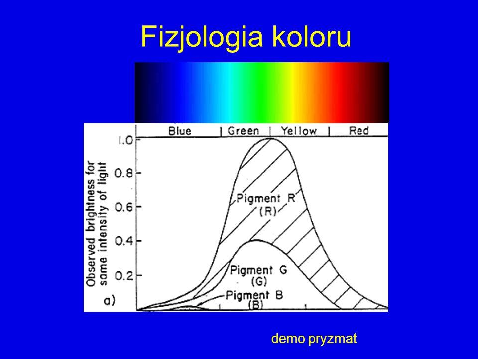 Fizjologia koloru demo pryzmat