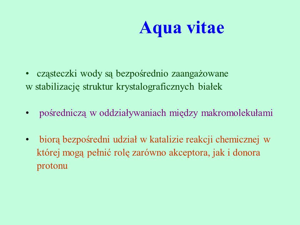 Aqua vitae cząsteczki wody są bezpośrednio zaangażowane w stabilizację struktur krystalograficznych białek pośredniczą w oddziaływaniach między makrom