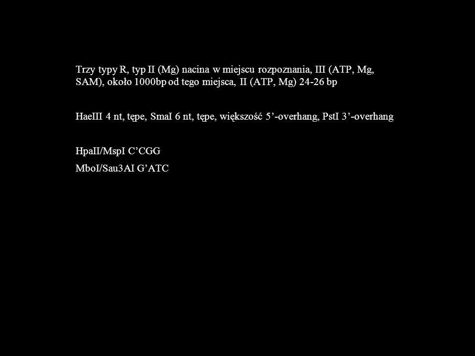 Trzy typy R, typ II (Mg) nacina w miejscu rozpoznania, III (ATP, Mg, SAM), około 1000bp od tego miejsca, II (ATP, Mg) 24-26 bp HaeIII 4 nt, tępe, SmaI 6 nt, tępe, większość 5'-overhang, PstI 3'-overhang HpaII/MspI C'CGG MboI/Sau3AI G'ATC