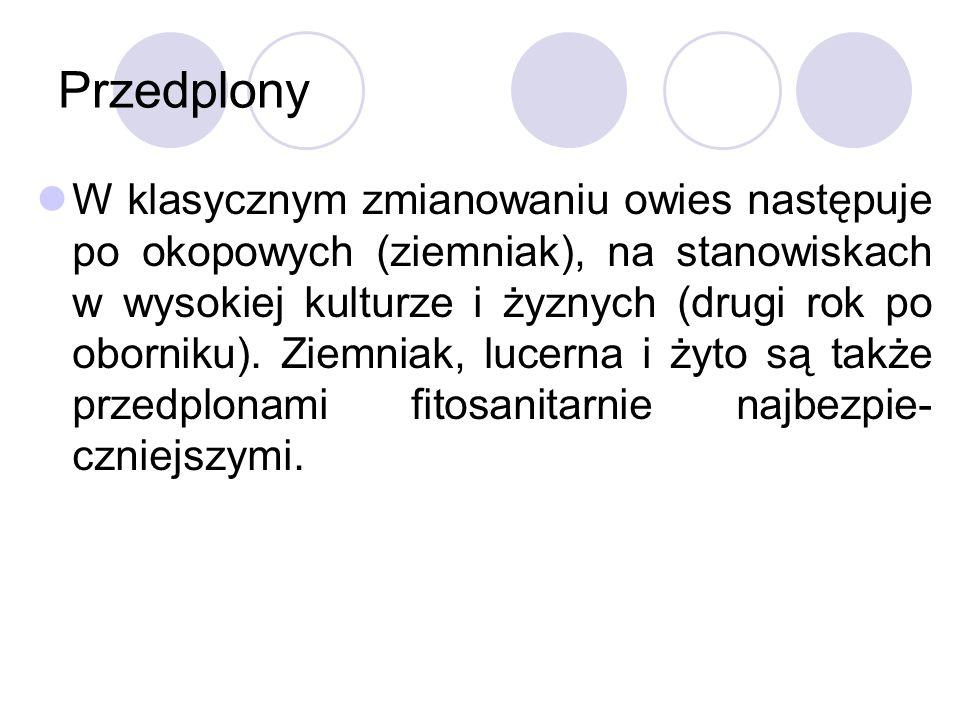 Przedplony W klasycznym zmianowaniu owies następuje po okopowych (ziemniak), na stanowiskach w wysokiej kulturze i żyznych (drugi rok po oborniku).