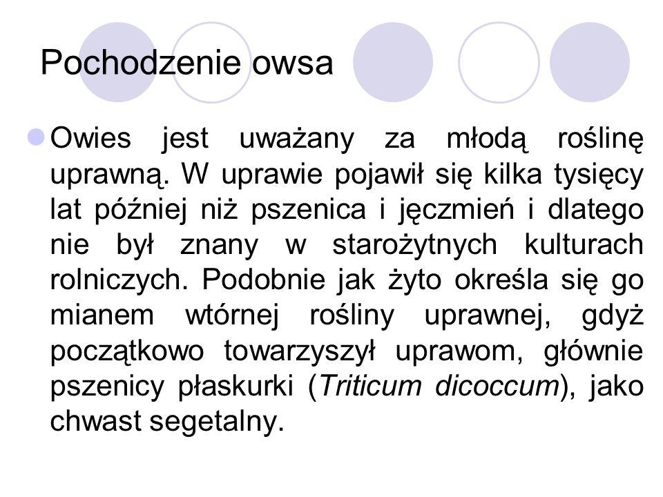 Pochodzenie owsa Owies jest uważany za młodą roślinę uprawną.