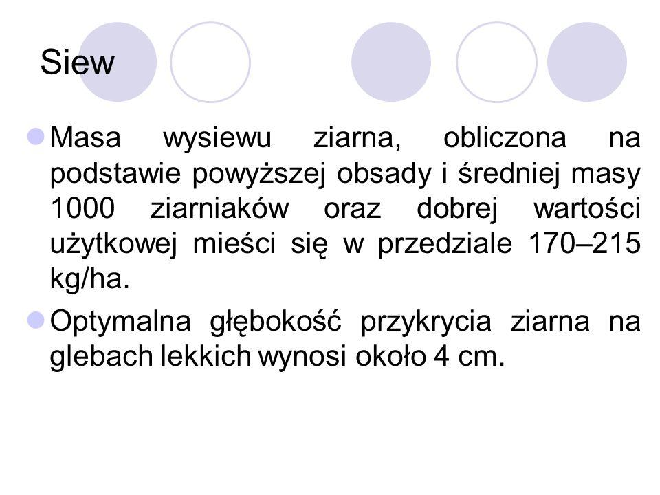 Siew Masa wysiewu ziarna, obliczona na podstawie powyższej obsady i średniej masy 1000 ziarniaków oraz dobrej wartości użytkowej mieści się w przedziale 170–215 kg/ha.
