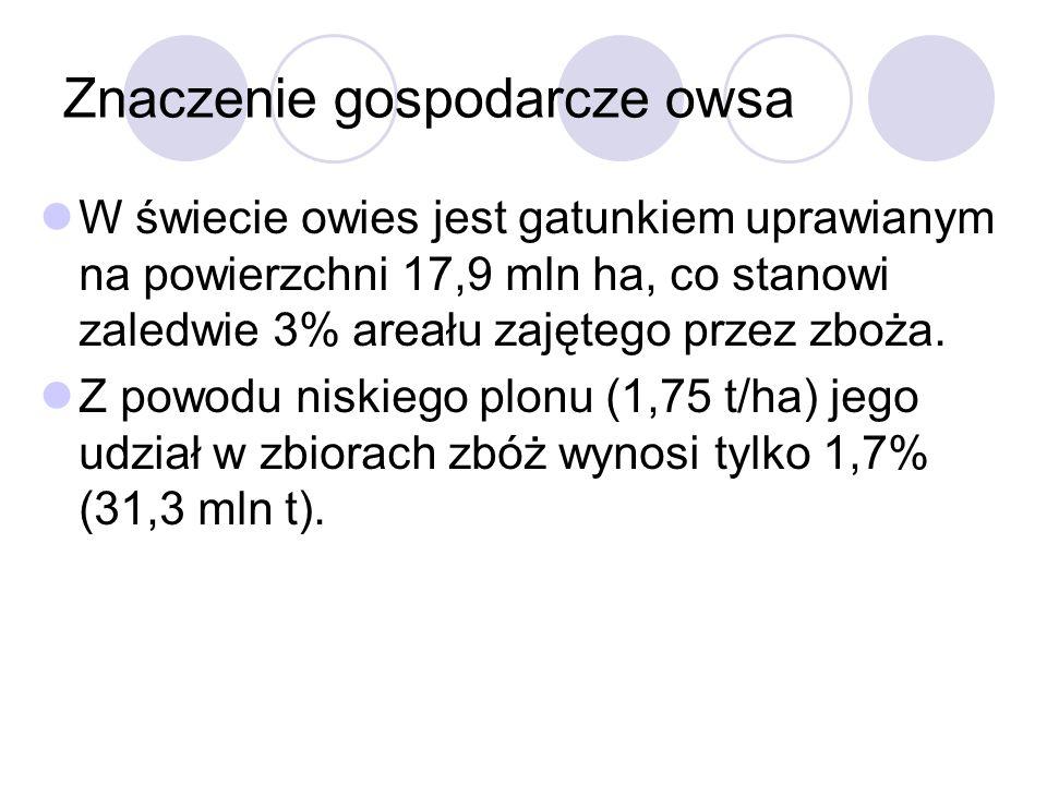 Znaczenie gospodarcze owsa W świecie owies jest gatunkiem uprawianym na powierzchni 17,9 mln ha, co stanowi zaledwie 3% areału zajętego przez zboża.