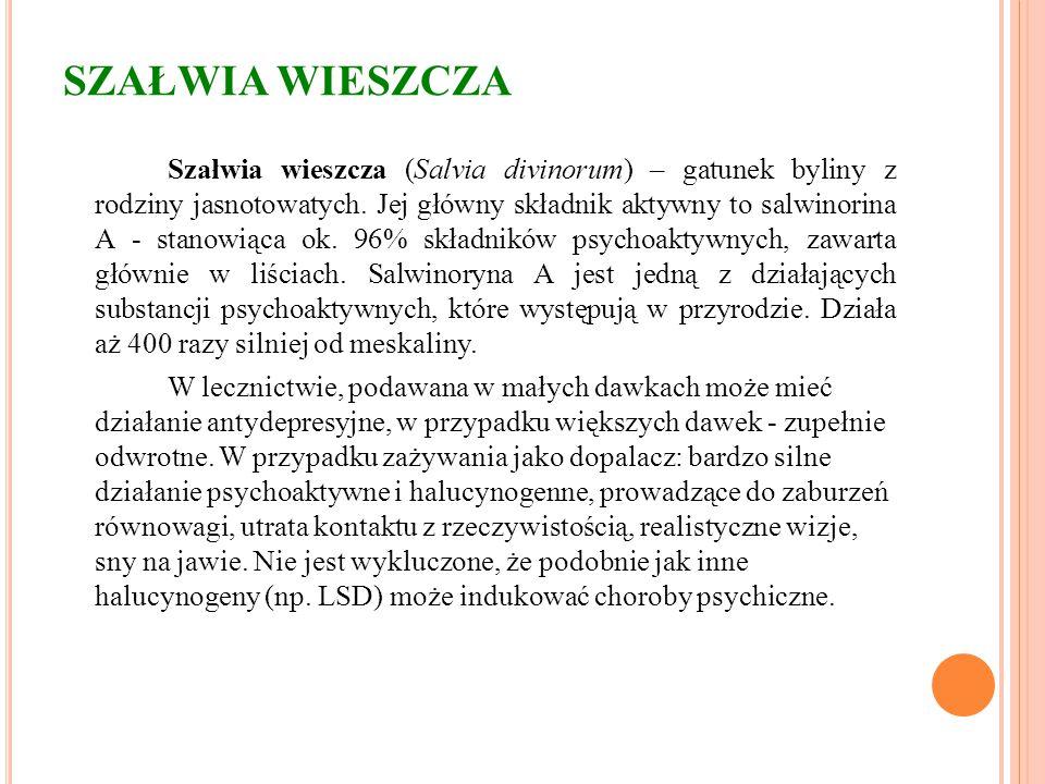 SZAŁWIA WIESZCZA Szałwia wieszcza (Salvia divinorum) – gatunek byliny z rodziny jasnotowatych. Jej główny składnik aktywny to salwinorina A - stanowią