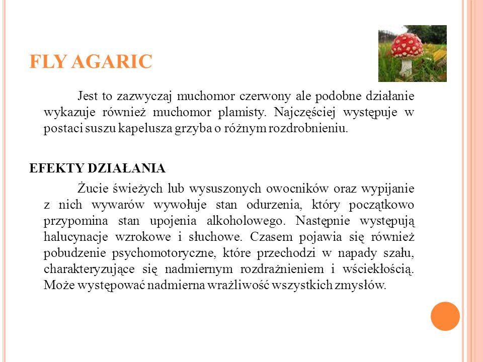FLY AGARIC Jest to zazwyczaj muchomor czerwony ale podobne działanie wykazuje również muchomor plamisty. Najczęściej występuje w postaci suszu kapelus