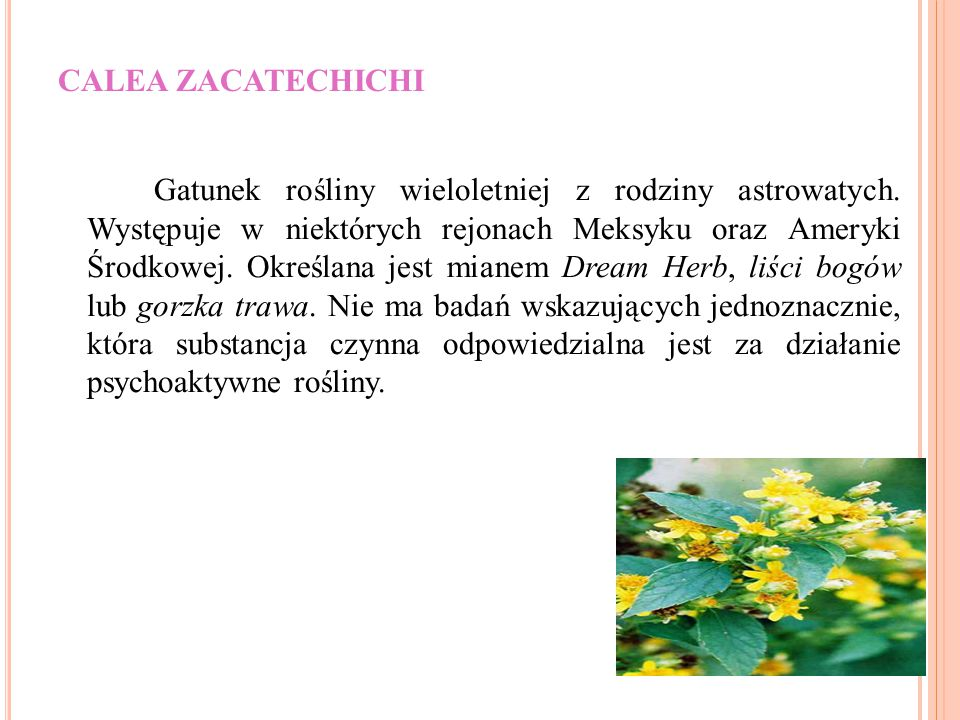 CALEA ZACATECHICHI Gatunek rośliny wieloletniej z rodziny astrowatych. Występuje w niektórych rejonach Meksyku oraz Ameryki Środkowej. Określana jest