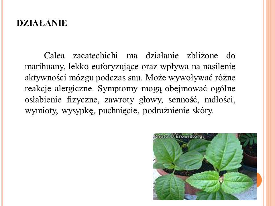 DZIAŁANIE Calea zacatechichi ma działanie zbliżone do marihuany, lekko euforyzujące oraz wpływa na nasilenie aktywności mózgu podczas snu. Może wywoły