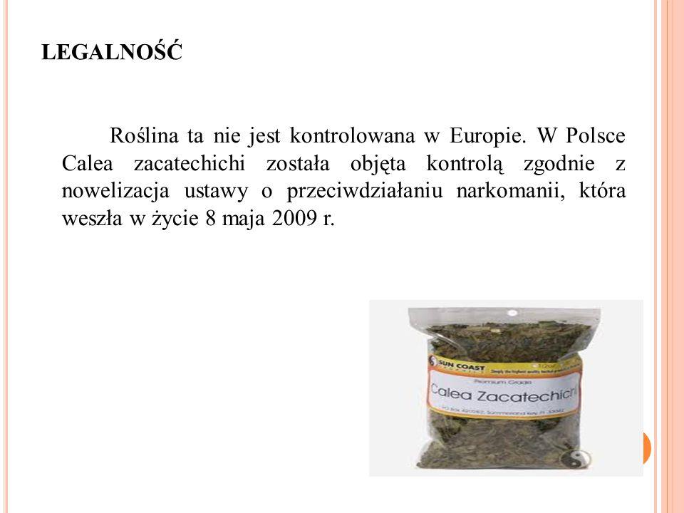 LEGALNOŚĆ Roślina ta nie jest kontrolowana w Europie. W Polsce Calea zacatechichi została objęta kontrolą zgodnie z nowelizacja ustawy o przeciwdziała