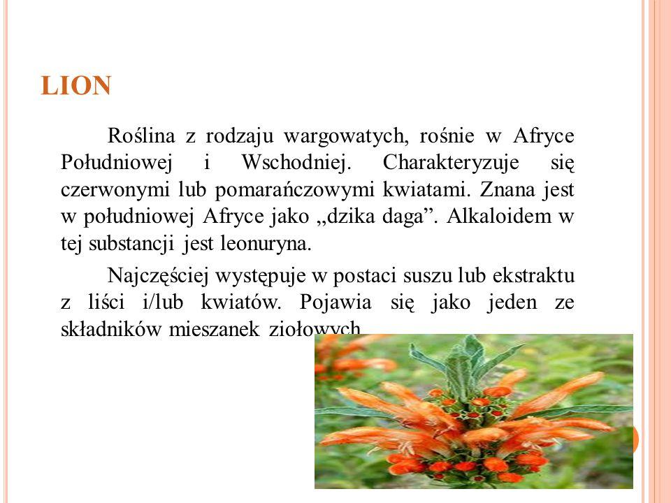 LION Roślina z rodzaju wargowatych, rośnie w Afryce Południowej i Wschodniej. Charakteryzuje się czerwonymi lub pomarańczowymi kwiatami. Znana jest w