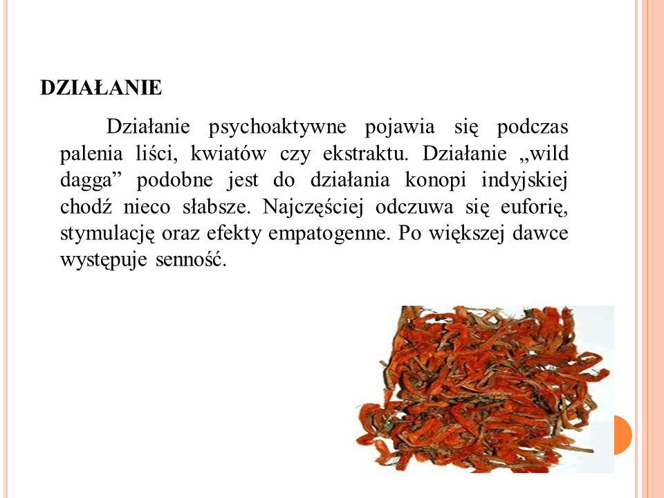 DZIAŁANIE Działanie psychoaktywne pojawia się podczas palenia liści, kwiatów czy ekstraktu.