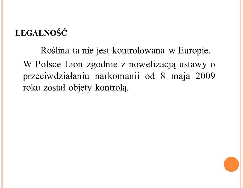 LEGALNOŚĆ Roślina ta nie jest kontrolowana w Europie. W Polsce Lion zgodnie z nowelizacją ustawy o przeciwdziałaniu narkomanii od 8 maja 2009 roku zos