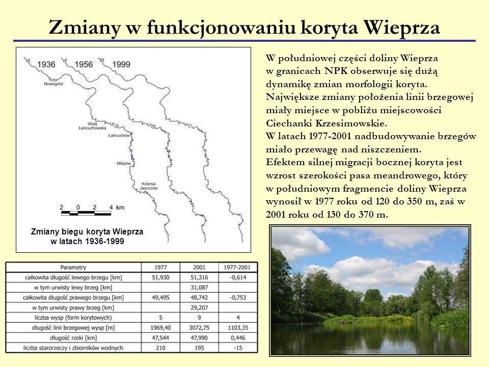 Zmiany biegu koryta Wieprza w latach 1936-1999 Zmiany w funkcjonowaniu koryta Wieprza W południowej części doliny Wieprza w granicach NPK obserwuje się dużą dynamikę zmian morfologii koryta.