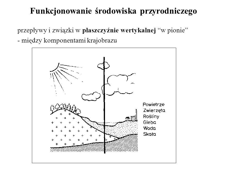 """Funkcjonowanie środowiska przyrodniczego przepływy i związki w płaszczyźnie wertykalnej """"w pionie"""" - między komponentami krajobrazu"""