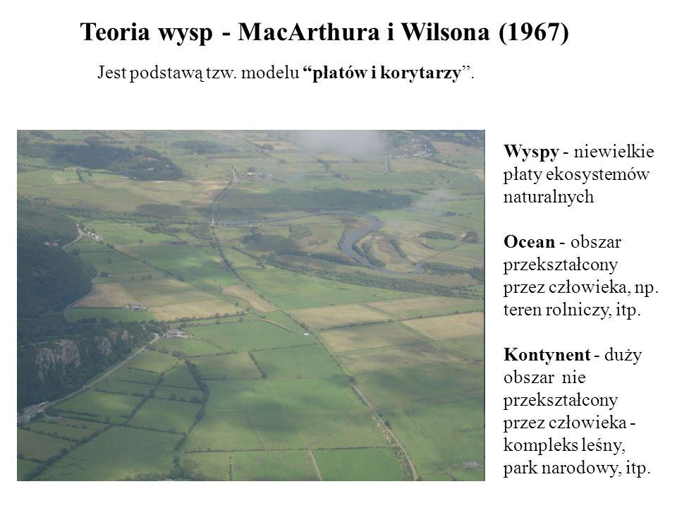 """Teoria wysp - MacArthura i Wilsona (1967) Jest podstawą tzw. modelu """"płatów i korytarzy"""". Wyspy - niewielkie płaty ekosystemów naturalnych Ocean - obs"""