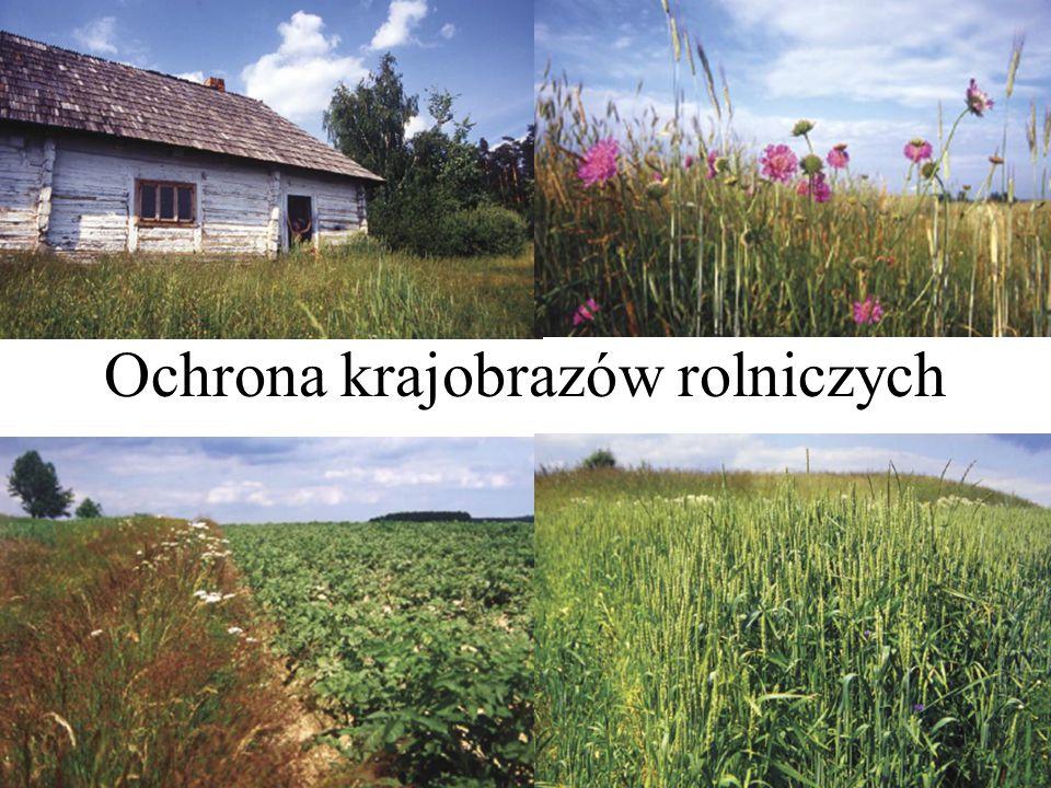 Zasady kształtowania krajobrazów rolniczych c.d.