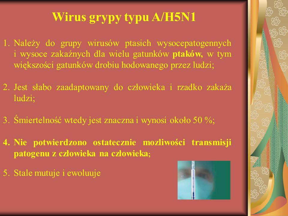 Wirus grypy typu A/H5N1 1.Należy do grupy wirusów ptasich wysocepatogennych i wysoce zakaźnych dla wielu gatunków ptaków, w tym większości gatunków dr