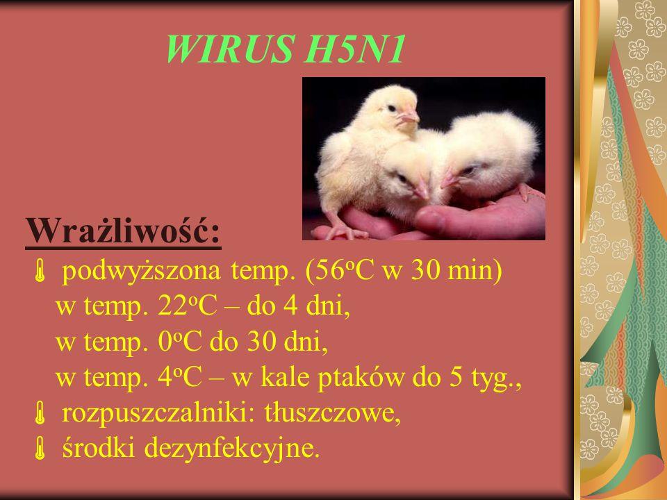 WIRUS H5N1 Wrażliwość:  podwyższona temp. (56 o C w 30 min) w temp. 22 o C – do 4 dni, w temp. 0 o C do 30 dni, w temp. 4 o C – w kale ptaków do 5 ty