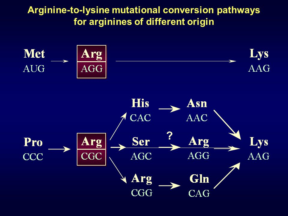 Arginine-to-lysine mutational conversion pathways for arginines of different origin