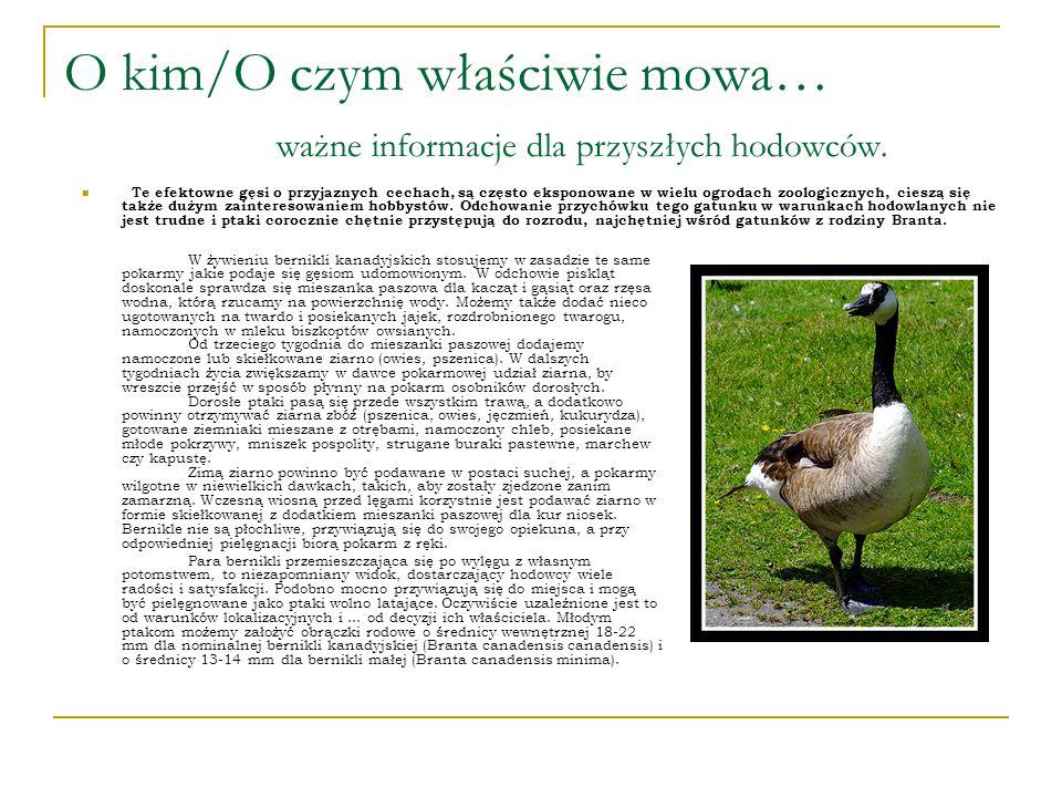 Poszukiwany/Poszukiwana… Cechy gatunku: Wymiary średnie dł. ciała: ok. 45 - 110 cm rozpiętość skrzydeł: do 190 cm waga: ok. 2,0 - 6,5 kg Brak dymorfiz