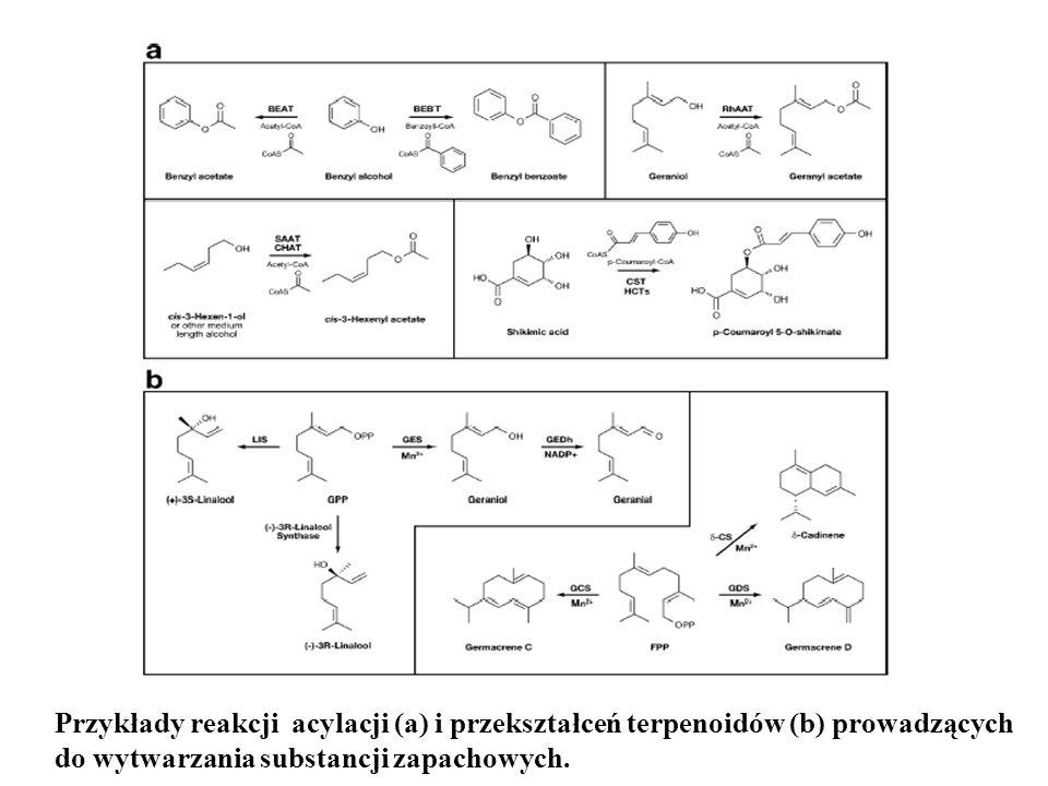 Przykłady reakcji acylacji (a) i przekształceń terpenoidów (b) prowadzących do wytwarzania substancji zapachowych.