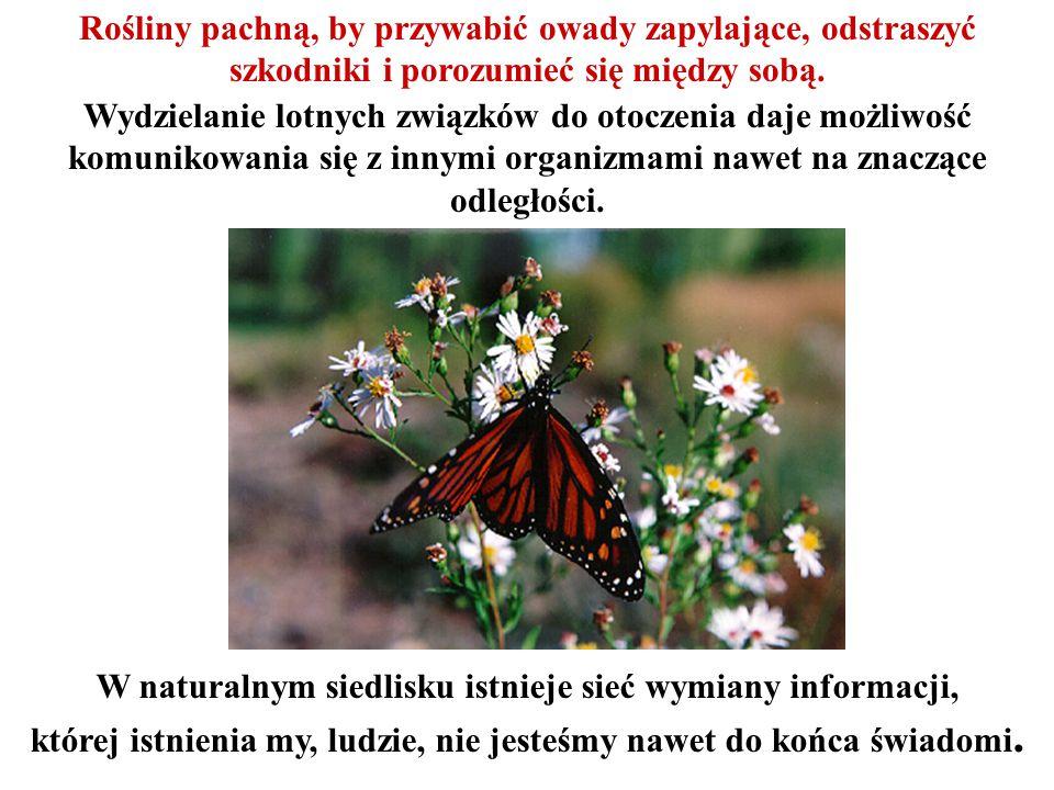 Rośliny pachną, by przywabić owady zapylające, odstraszyć szkodniki i porozumieć się między sobą. Wydzielanie lotnych związków do otoczenia daje możli